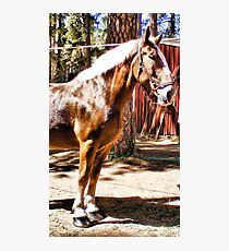 Blond Draft Horse Photographic Print