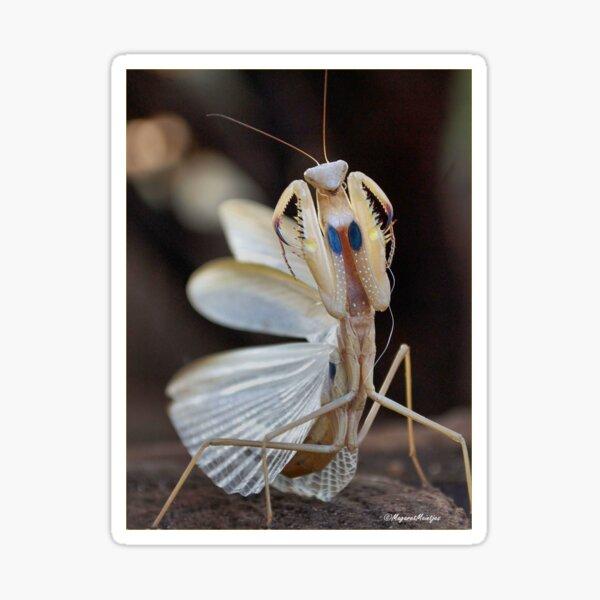 """ELEGANCE"" IN CAPTURE - The praying mantis Sticker"