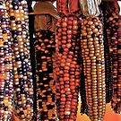 Indian Corn by Ray4cam