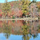 Leaves-a-Changin by jweekley
