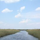 Everglades by evilninjakitten