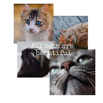 All cats are beautiful by Belius