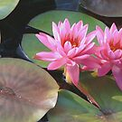Louise Villemarette Water Lillies by Robert Armendariz