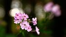Bokeh Backdrop by Aaron Campbell