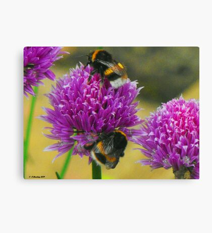 Sharing the Pollen Canvas Print