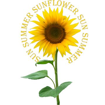 Sunflower by cicity458