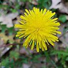 yellow flower by treavorart