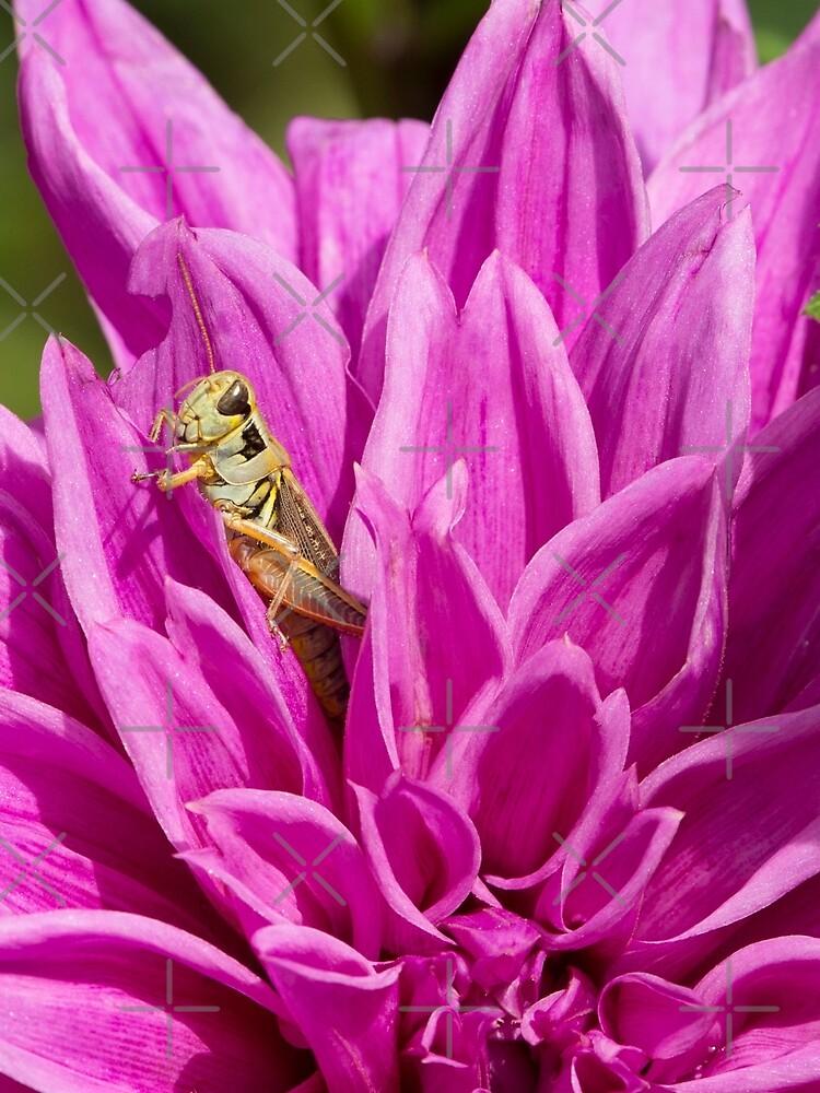 Snug As A Bug by Jashburn