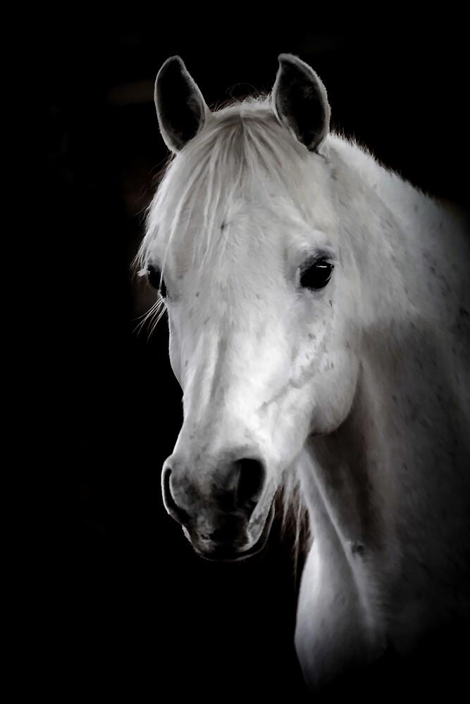 Arabian Horse by Athena McKinzie