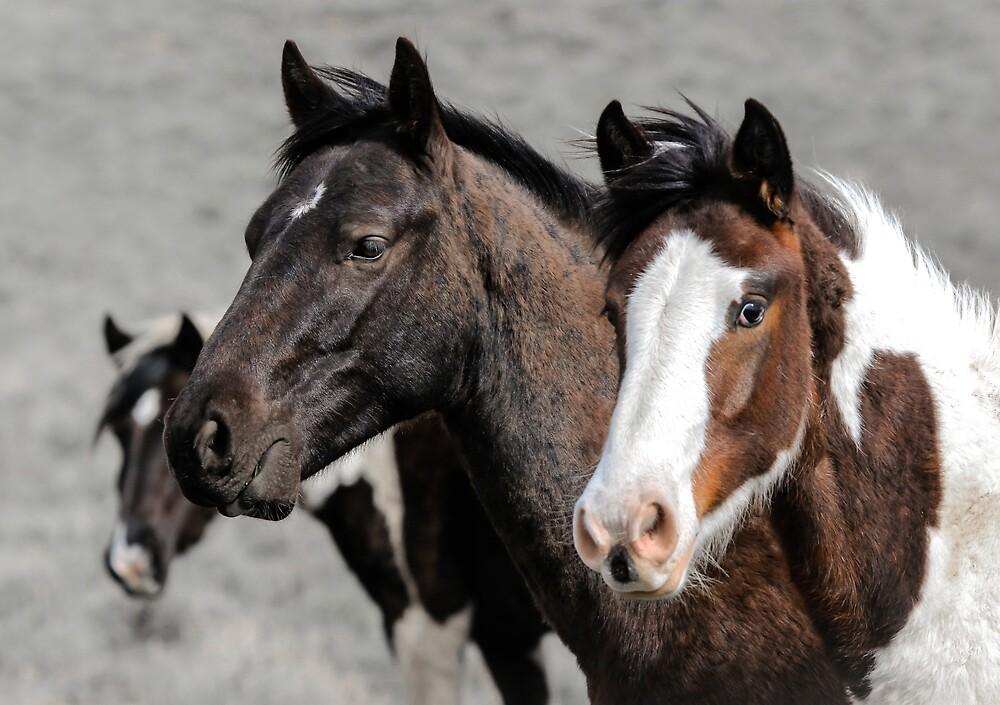 Oregon's Wild Horses by Athena Mckinzie