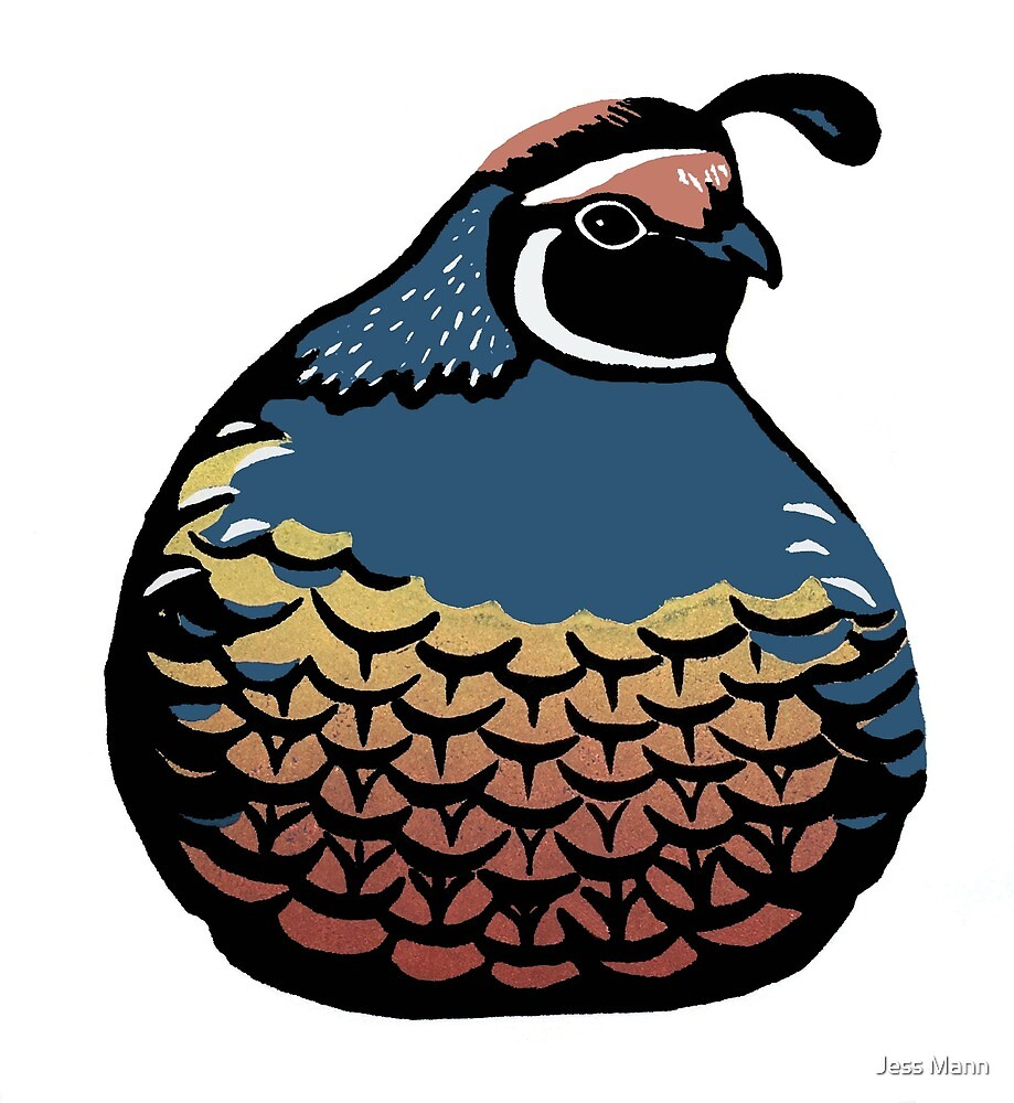 Plump Quail by Jess Mann
