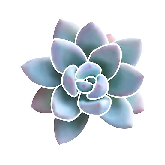 Succulent Love by Sarah Ponce Hill