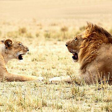 Post-coital Conversation, Lions, Maasai Mara, Kenya  by Carole-Anne