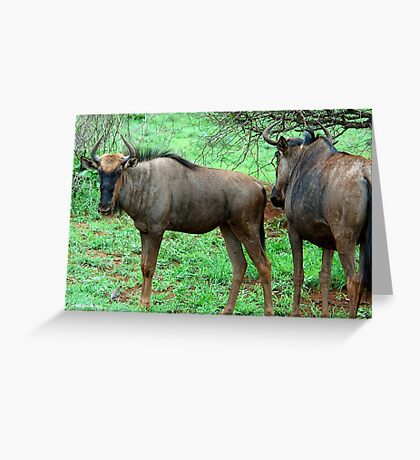 THE UGLY AND BEAUTIFUL BLUE WILDEBEEST (Connochaetes taurinus) Greeting Card