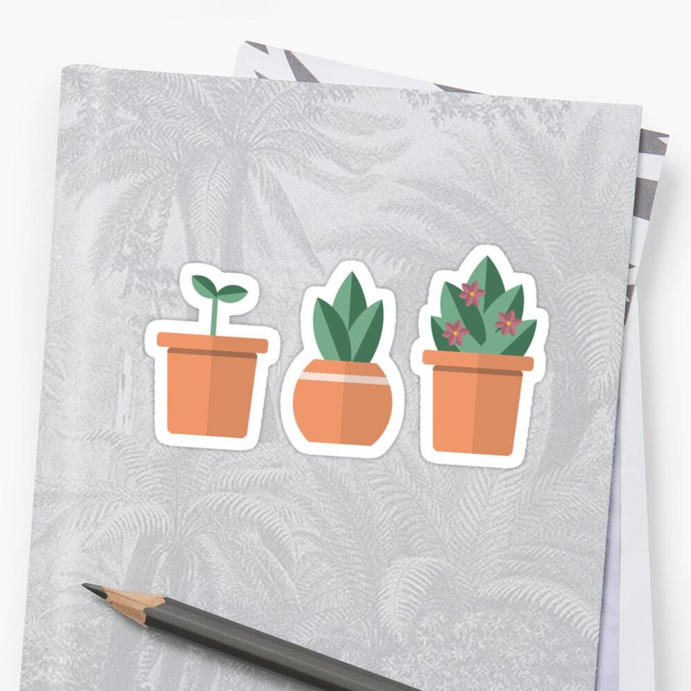 succulents r cute by annaashai