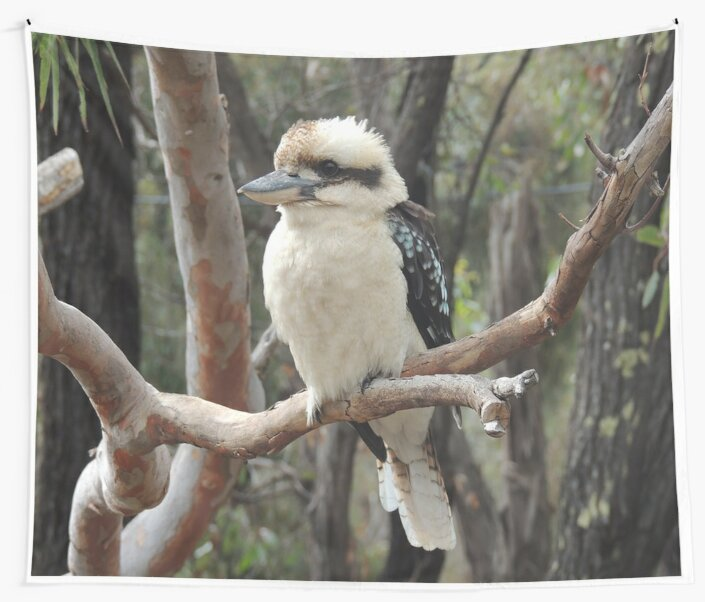 Laughing Kookaburra by AusAdventures