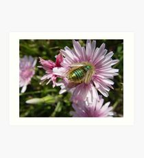 Insect on Flower Art Print