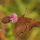 Last Of The Summer Nectar by Robert Abraham