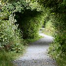 A Winding Path by Wolf Read