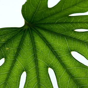 Green Leaf by silvtom