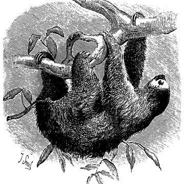 Sloth by giddyaunt