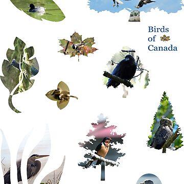 Birds of Canada 1 by BlueNorth