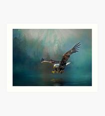 Eagle swooping for fish Art Print
