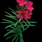 Pink Floral with leaf by hutofdesigns