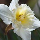 Spring Time Daffodil by Joy Watson