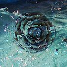 Drifting Pinecone by R&PChristianDesign &Photography