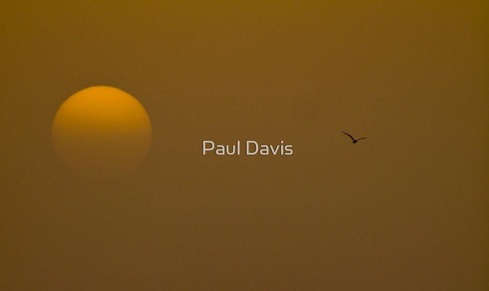 Swim Seagull In The Sky.... by Paul Davis