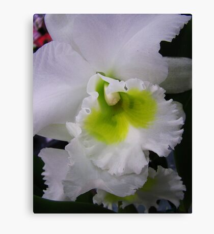 Orchid # 10 Canvas Print