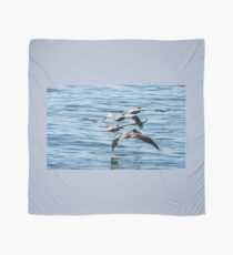 Brown Pelicans Flying In Formation Scarf