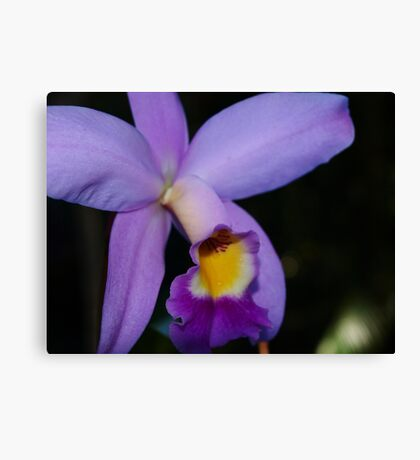 Orchid # 3 Canvas Print