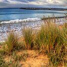 The grassy knoll at Apollo Bay in colour by Elana Bailey