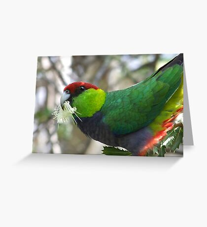 redcapped feeding Greeting Card
