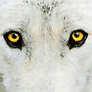 Yellow Wolf Eyes by Leon Woods