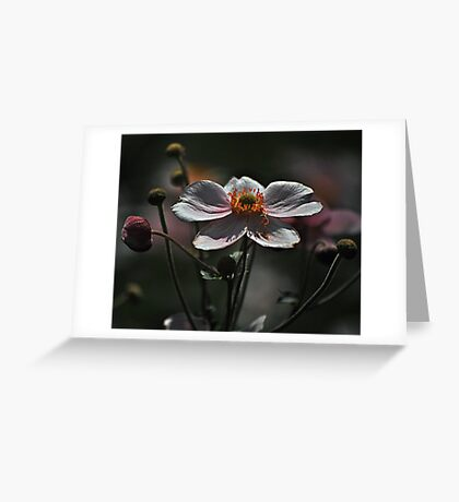 August Flowers ~ Anemones Greeting Card