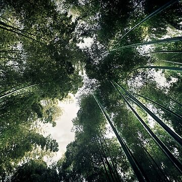 Arashiyama bamboo forest artistic view of tree tops from below art photo print by AwenArtPrints