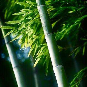 Beautiful closeup of green bamboo leaves and tall stems art photo print by AwenArtPrints