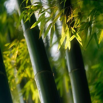 Closeup Bamboo leaves and culms in fall scenery art photo print by AwenArtPrints
