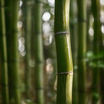 Wavy bamboo stem wet after rain art photo print by AwenArtPrints