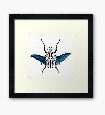 Goliath Beetle in flight Framed Print
