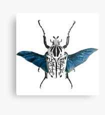 Goliath Beetle in flight Metal Print
