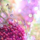 September Dreams by TriciaDanby