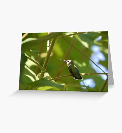 Resting Spot Greeting Card