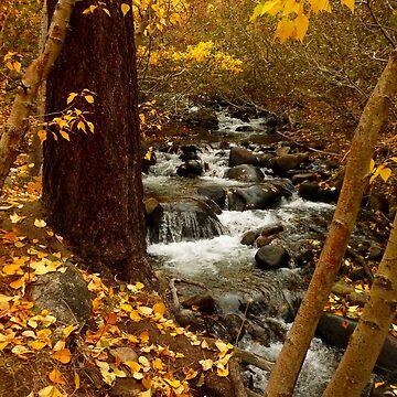 Autumn Foliage at Galena Creek by elainebawden