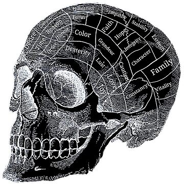 Phrenology Skull by ShayneoftheDead