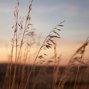 Wheat Field Sunset Photography Print by griffingphoto
