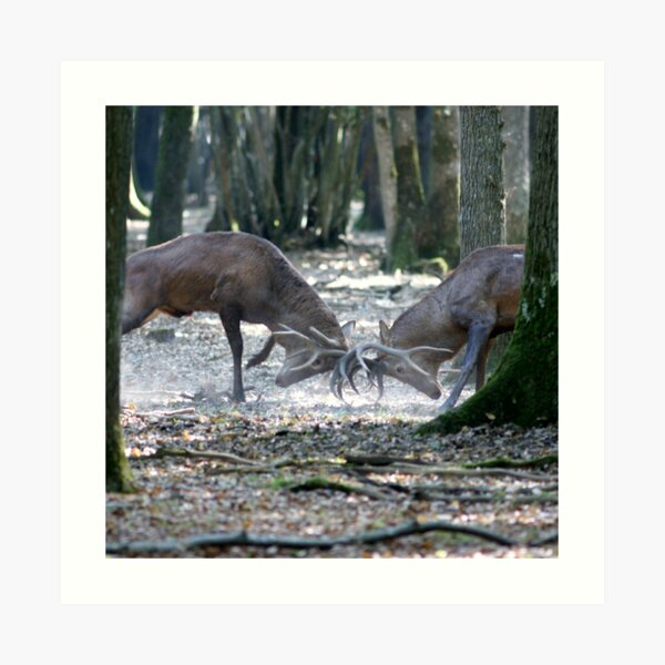 Red deers fighting Impression artistique